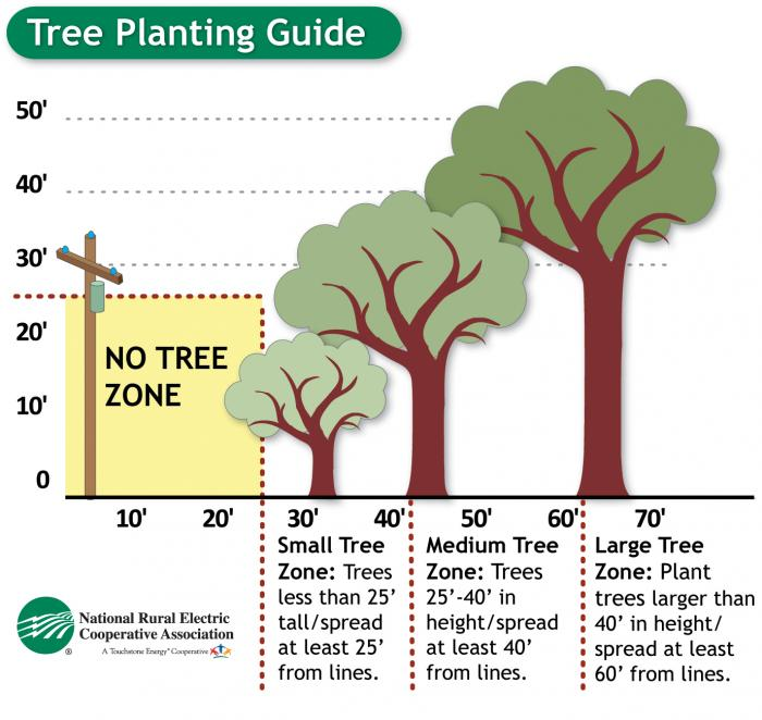 Tree zone graphic: Trees under 25' in height/spread should be planted at least 25' from the line. Trees between 25' and 40' should be planted at least 40' away, and trees over 40' should be planted at least 60' away.