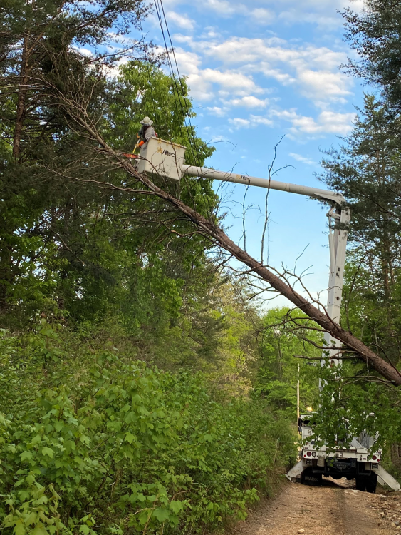 Cutting trees
